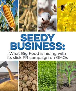 Seedy Business